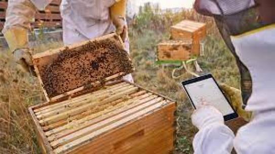 Arılara Teknoloji Desteği